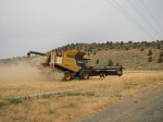 A Claas Lexion 750 wearing the Walker Brothers logo turns in a wheat field in Malin, Oregon.