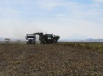 Chipping potatoes being harvested in the Stronghold Field near Tulelake, CA.