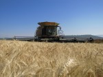 Claas Lexion 750 in wheat field waiting for grain harvest to begin on the Running Y Ranch.