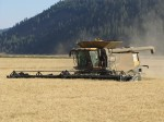 Claas Lexion 750 cutting a field of conventional wheat on the Running Y Ranch.