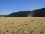 A wheat field on the Running Y Ranch being harvested by Walker Brothers' grain harvest crew.