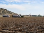 Two potato trucks work with harvester to dig a chipping potato field.
