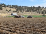 A chipping potato field being harvested just outside of Malin, Oregon.