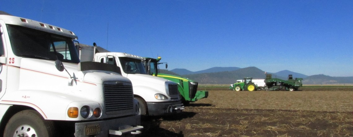 Potato trucks and tractor are lined up as a tractor pulling a potato bulker fills a spud truck in the background at the Running Y Ranch near Klamath Falls, Oregon.