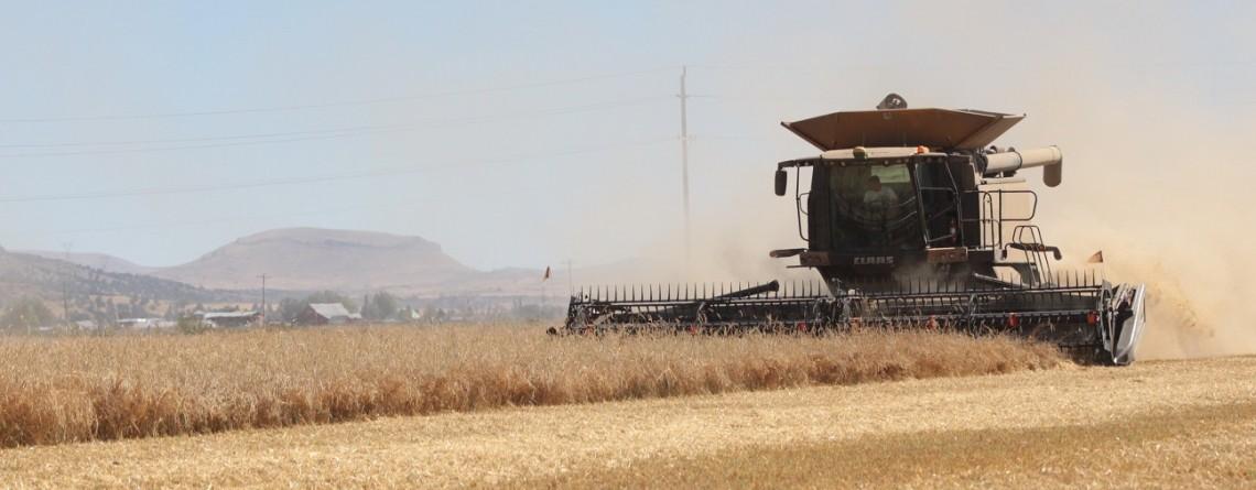 Harvest Season Has Arrived!
